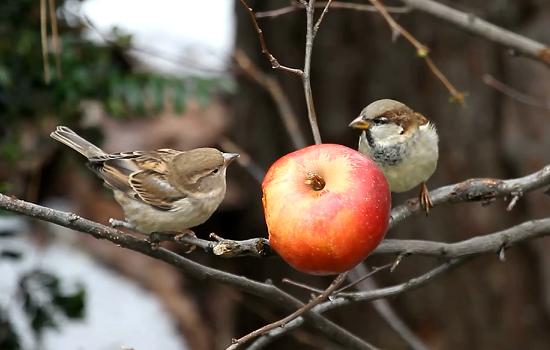 Житель Актау призывает горожан кормить птиц