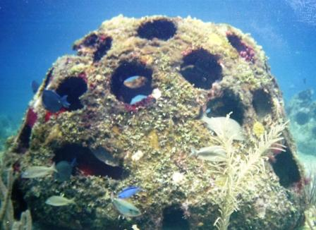 НПО Мангистау просят нефтяные компании установить искусственные рифы в море