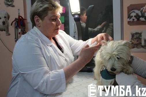 Журналисты провели один день с актауским ветеринаром