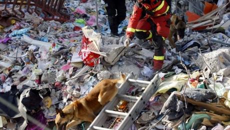 Лабрадор Дайко умер отистощения, однако спас 7 человек вЭквадоре