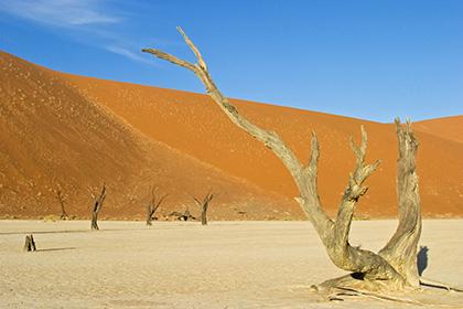 Скорое повышение температуры Земли на7 градусов признали неизбежным
